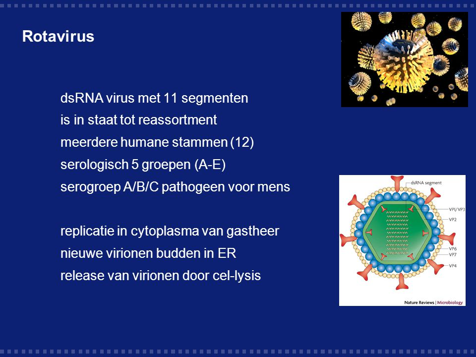 Rotavirus dsRNA virus met 11 segmenten is in staat tot reassortment