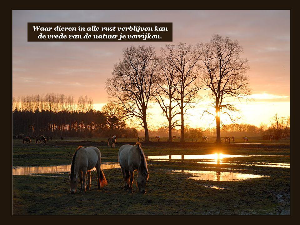 Waar dieren in alle rust verblijven kan de vrede van de natuur je verrijken.