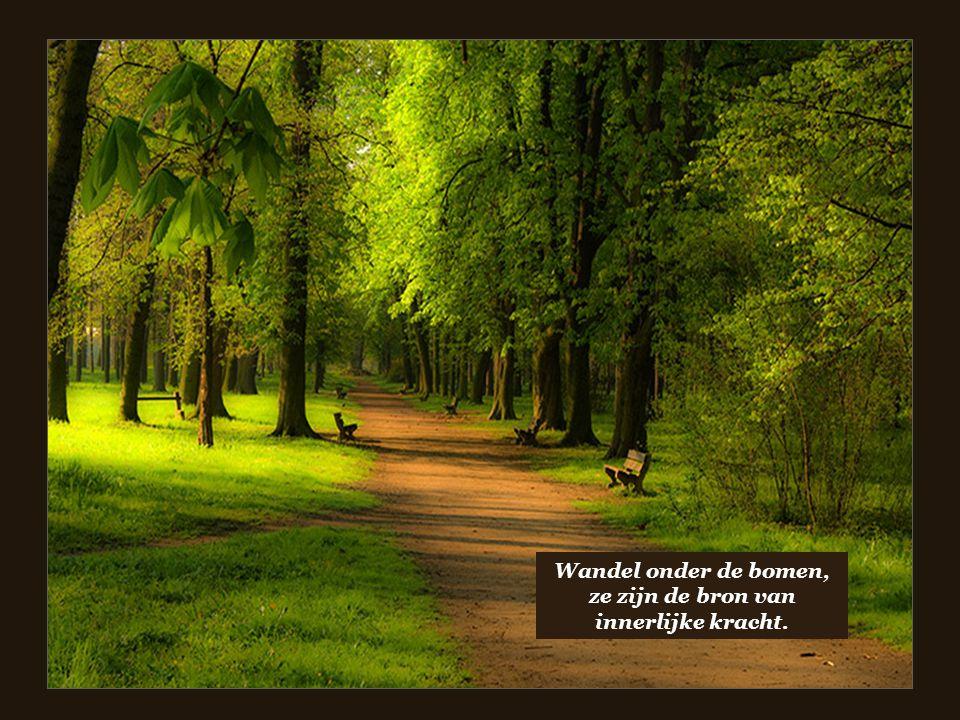 Wandel onder de bomen, ze zijn de bron van innerlijke kracht.