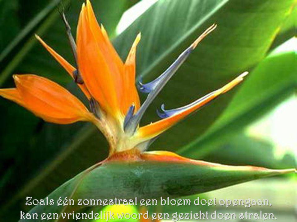 Zoals één zonnestraal een bloem doet opengaan,