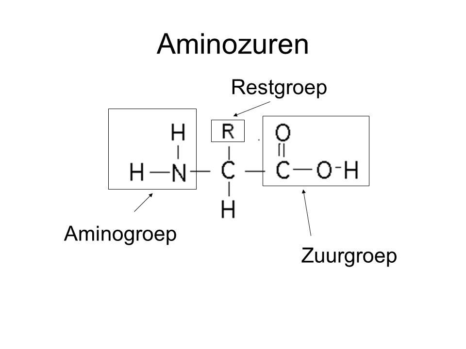 Aminozuren Restgroep Aminogroep Zuurgroep
