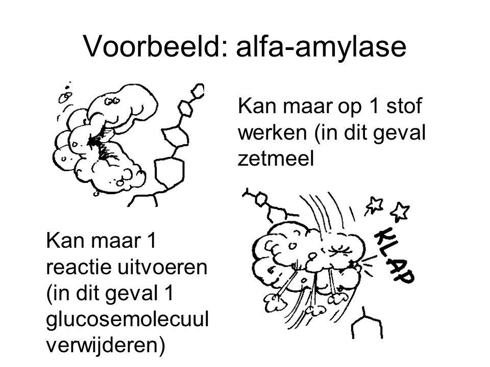 Voorbeeld: alfa-amylase