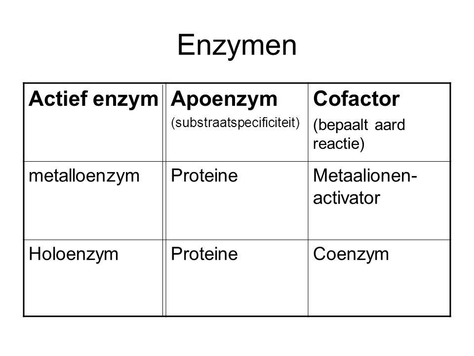 Enzymen Actief enzym Apoenzym Cofactor metalloenzym Proteine