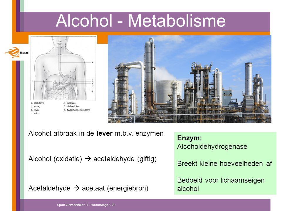 Alcohol - Metabolisme Alcohol afbraak in de lever m.b.v. enzymen