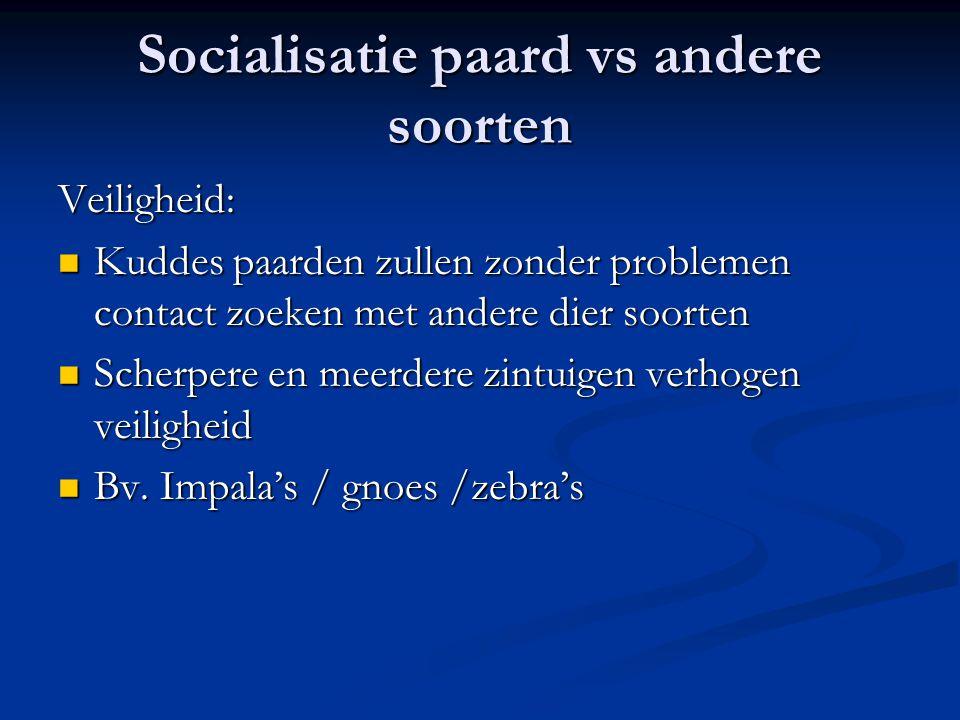 Socialisatie paard vs andere soorten