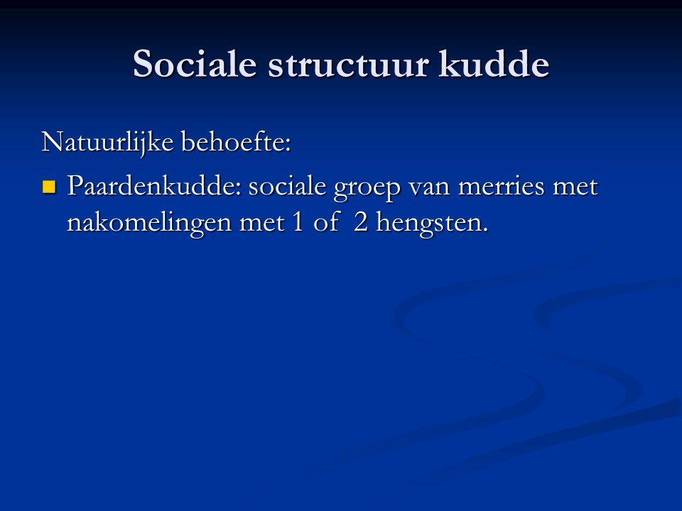 Sociale structuur kudde