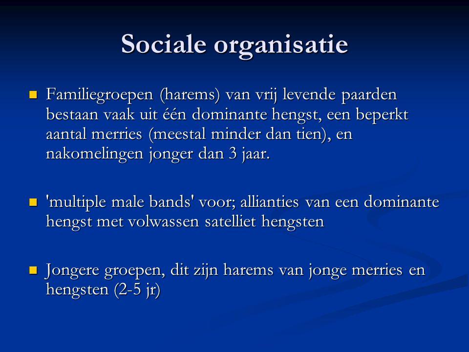 Sociale organisatie