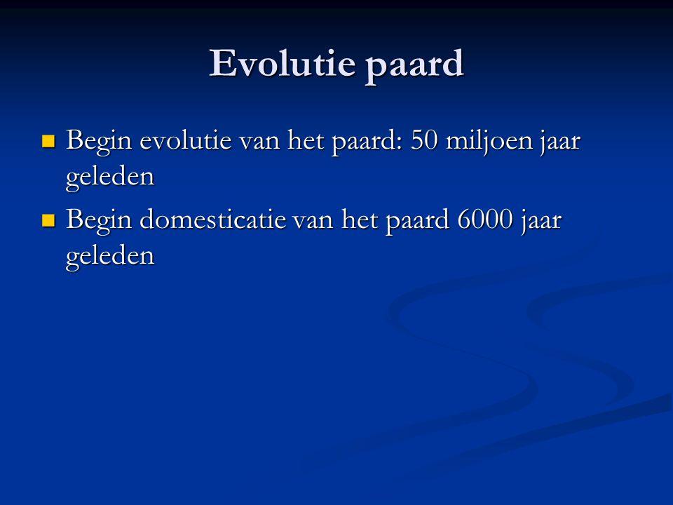 Evolutie paard Begin evolutie van het paard: 50 miljoen jaar geleden