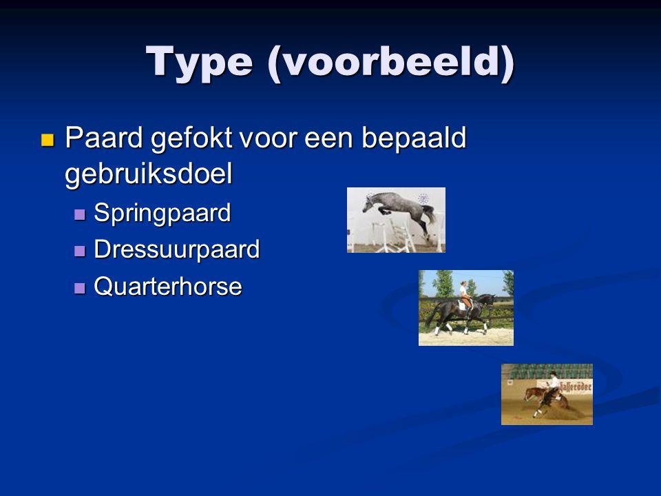 Type (voorbeeld) Paard gefokt voor een bepaald gebruiksdoel