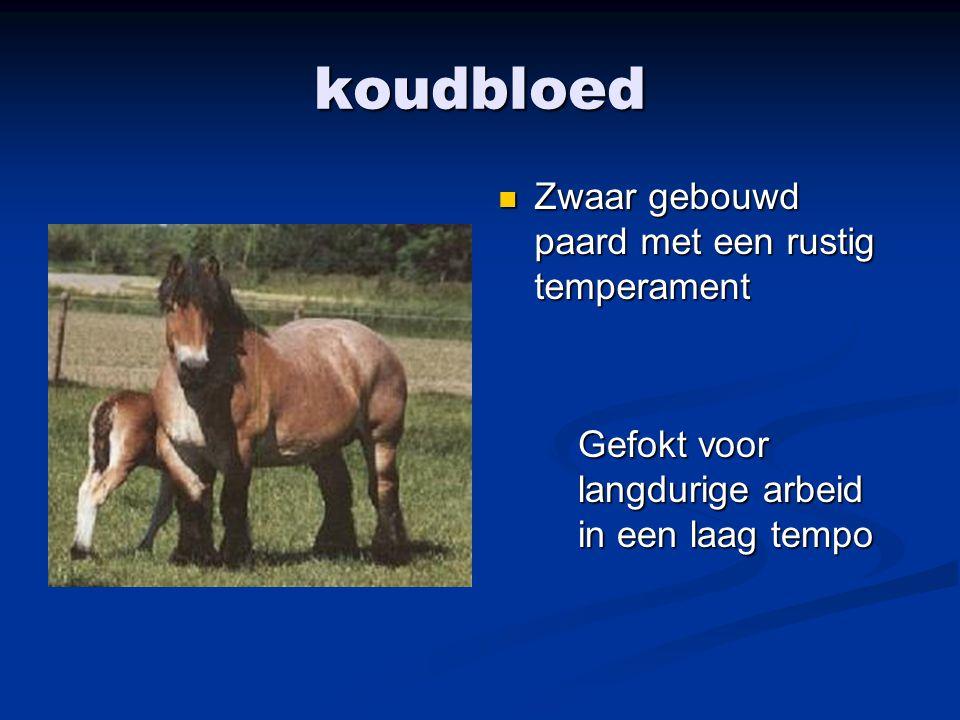 koudbloed Zwaar gebouwd paard met een rustig temperament