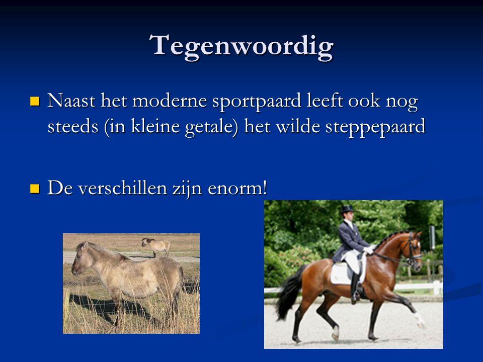Tegenwoordig Naast het moderne sportpaard leeft ook nog steeds (in kleine getale) het wilde steppepaard.