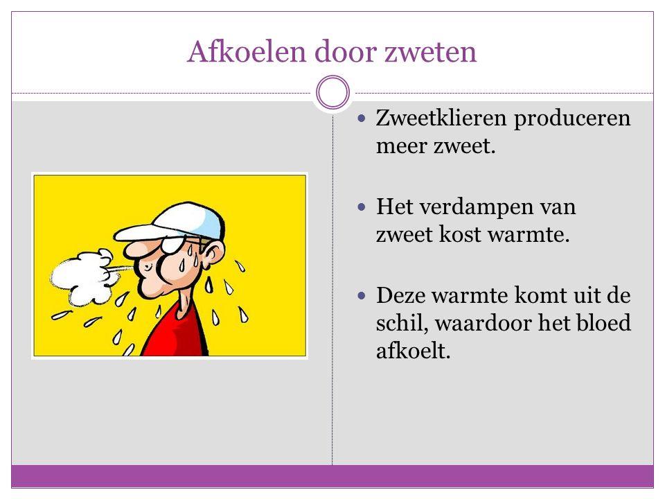 Afkoelen door zweten Zweetklieren produceren meer zweet.