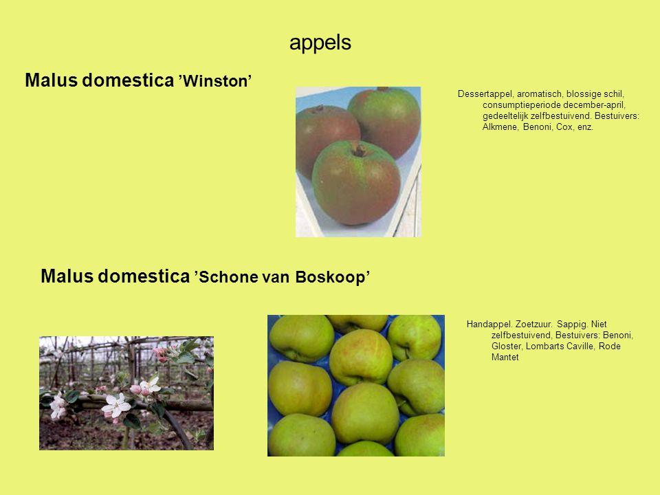 appels Malus domestica 'Winston' Malus domestica 'Schone van Boskoop'