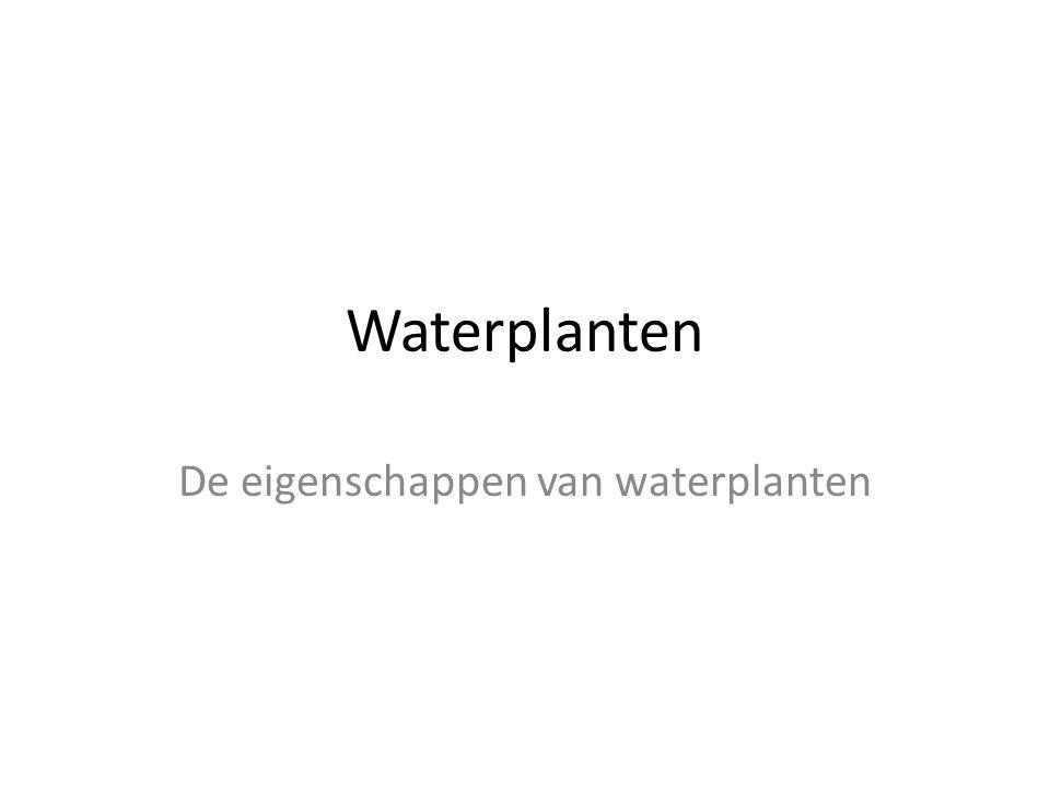 De eigenschappen van waterplanten