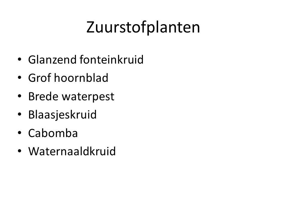 Zuurstofplanten Glanzend fonteinkruid Grof hoornblad Brede waterpest
