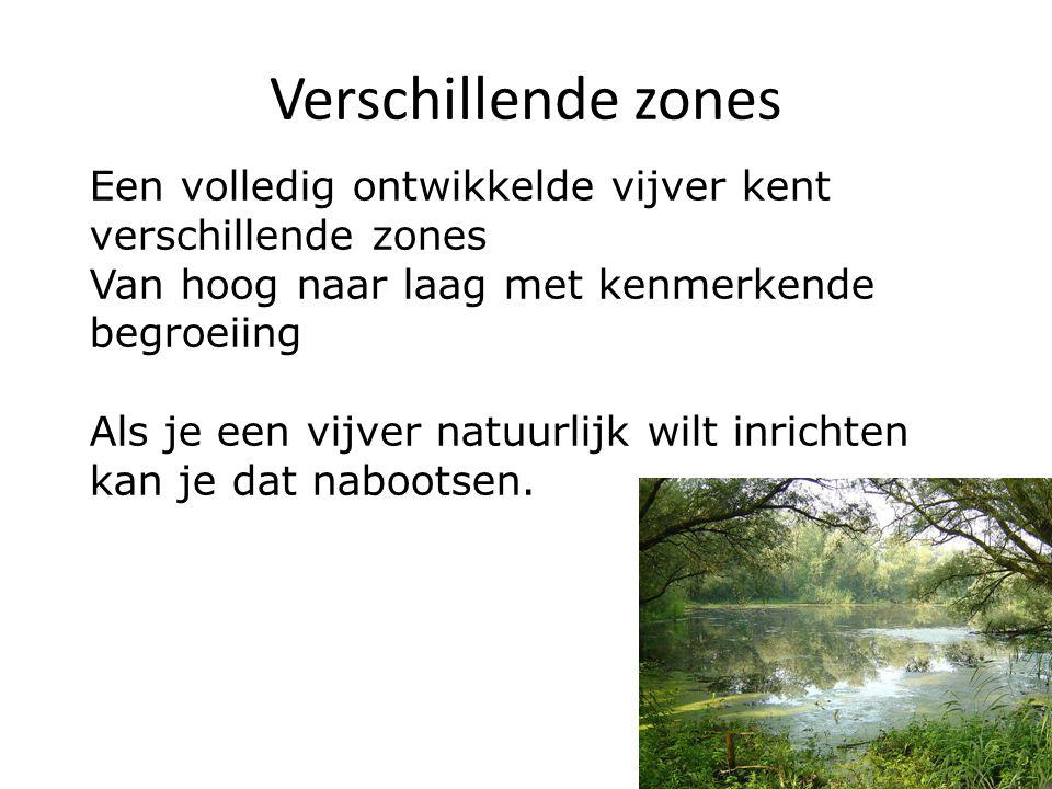 Verschillende zones Een volledig ontwikkelde vijver kent verschillende zones. Van hoog naar laag met kenmerkende begroeiing.