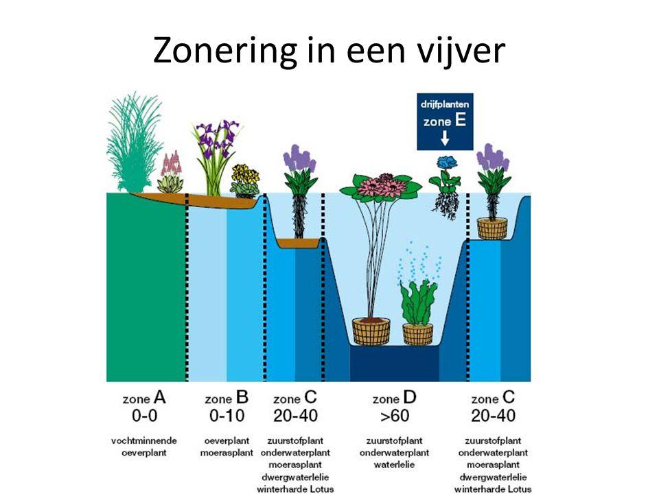 Zonering in een vijver Bron: http://www.zilverhaai.be/