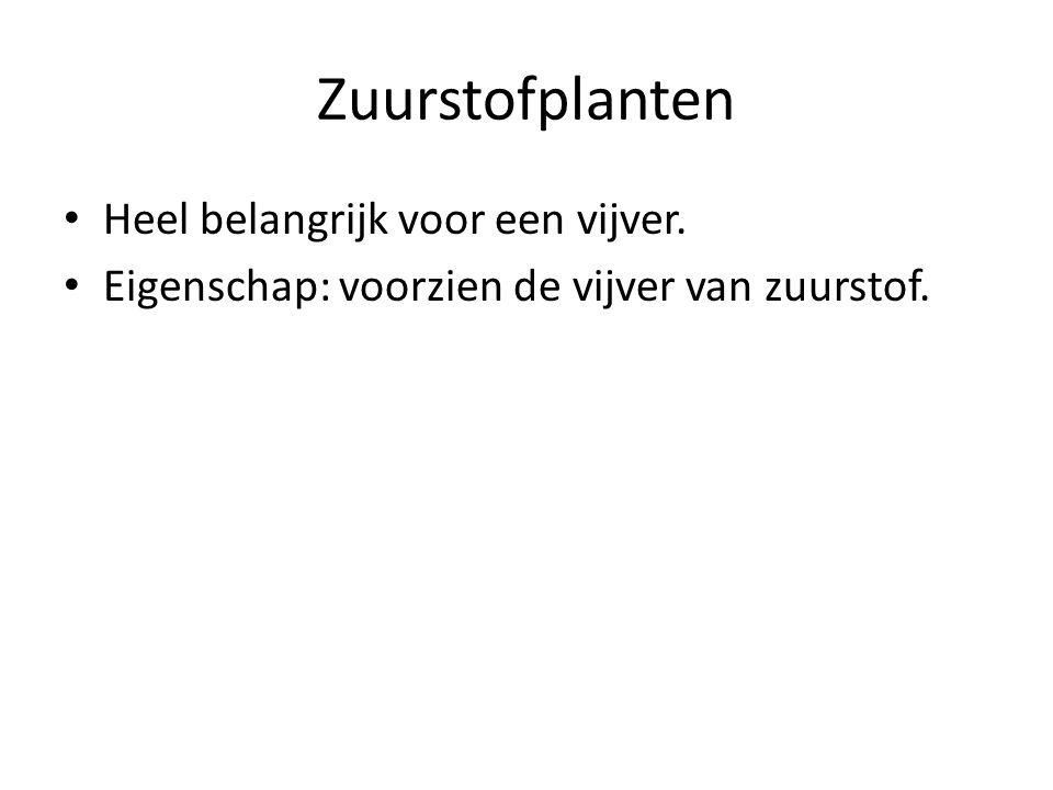 Zuurstofplanten Heel belangrijk voor een vijver.