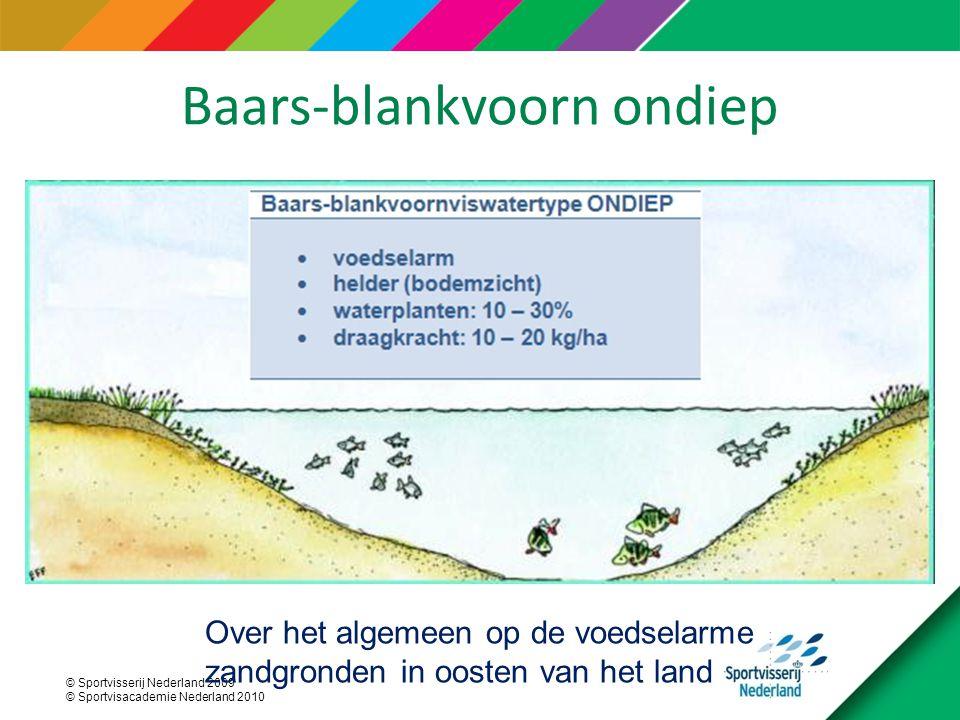 Baars-blankvoorn ondiep