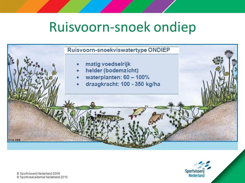 Ruisvoorn-snoek ondiep