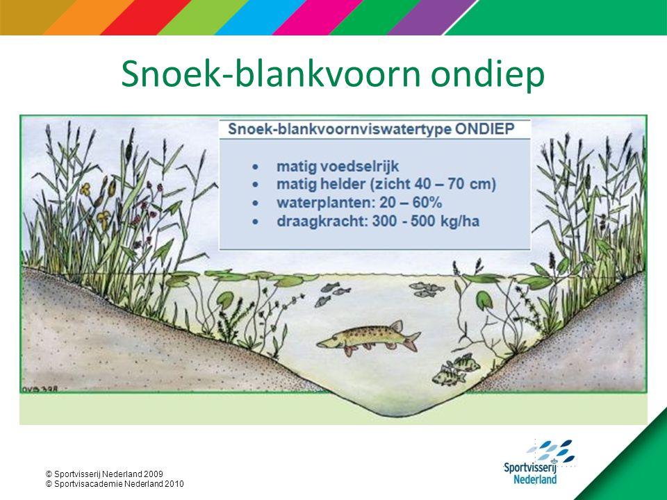 Snoek-blankvoorn ondiep