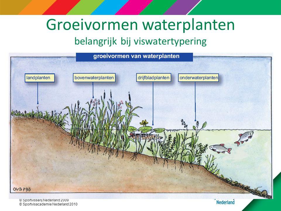 Groeivormen waterplanten belangrijk bij viswatertypering