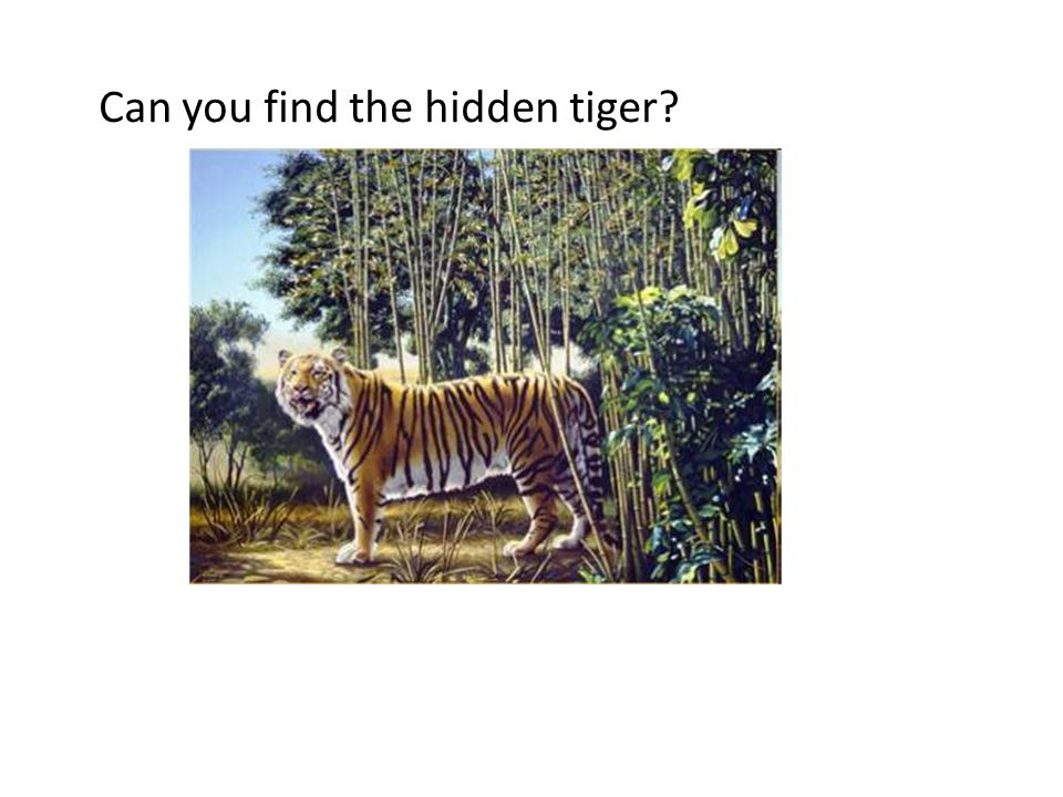 Can you find the hidden tiger