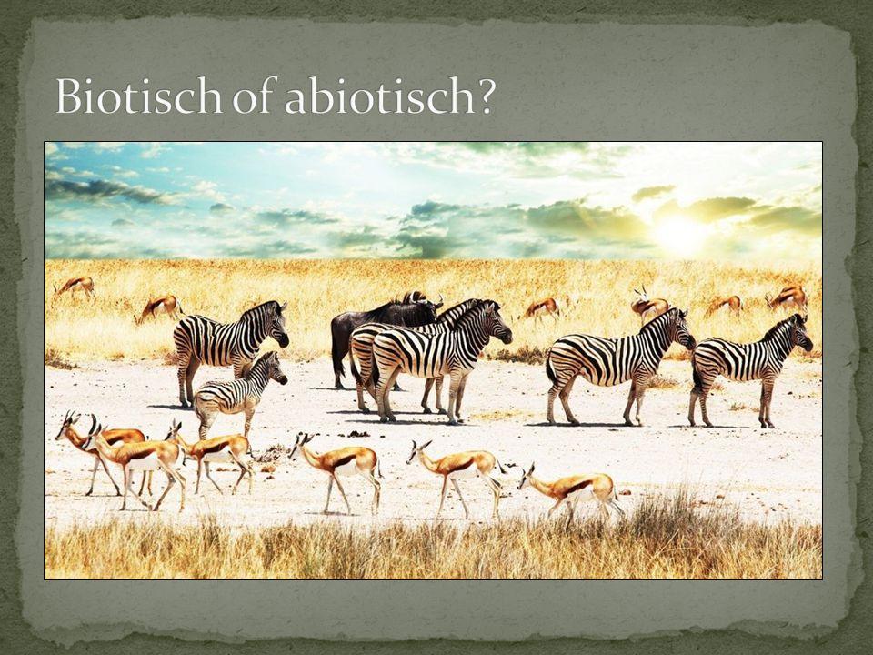 Biotisch of abiotisch Welke biotische en abiotische factoren zie je