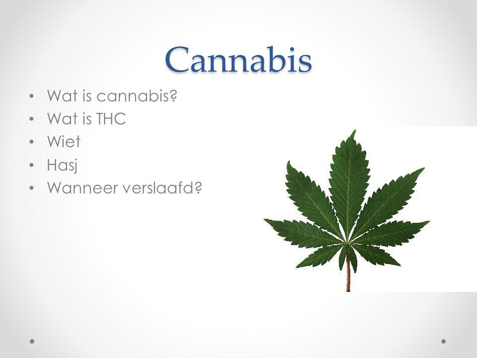 Cannabis Wat is cannabis Wat is THC Wiet Hasj Wanneer verslaafd