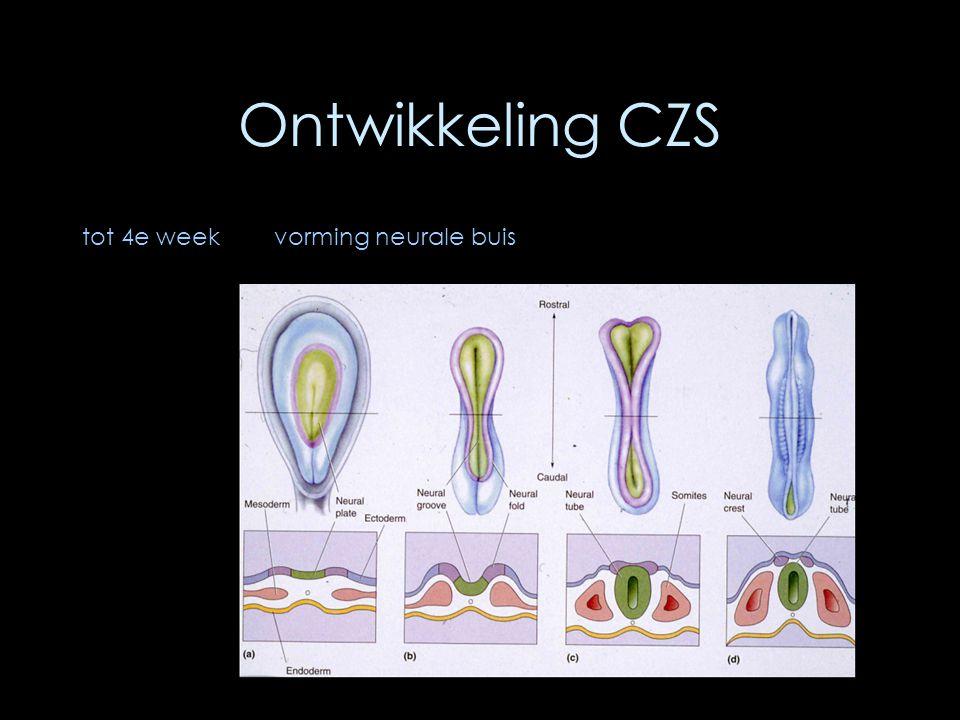 Ontwikkeling CZS tot 4e week vorming neurale buis