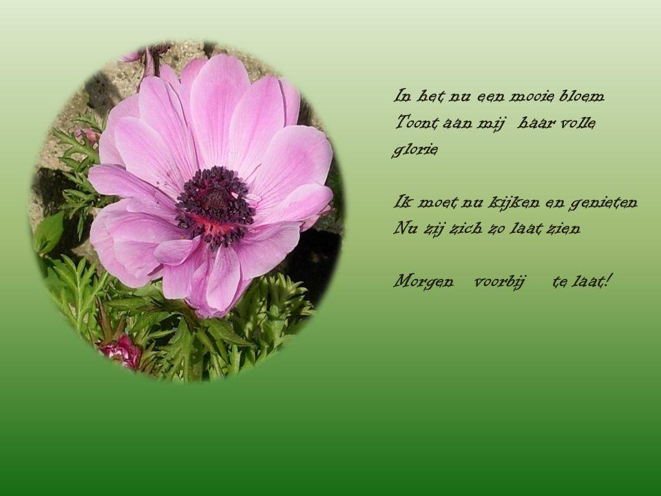 In het nu een mooie bloem