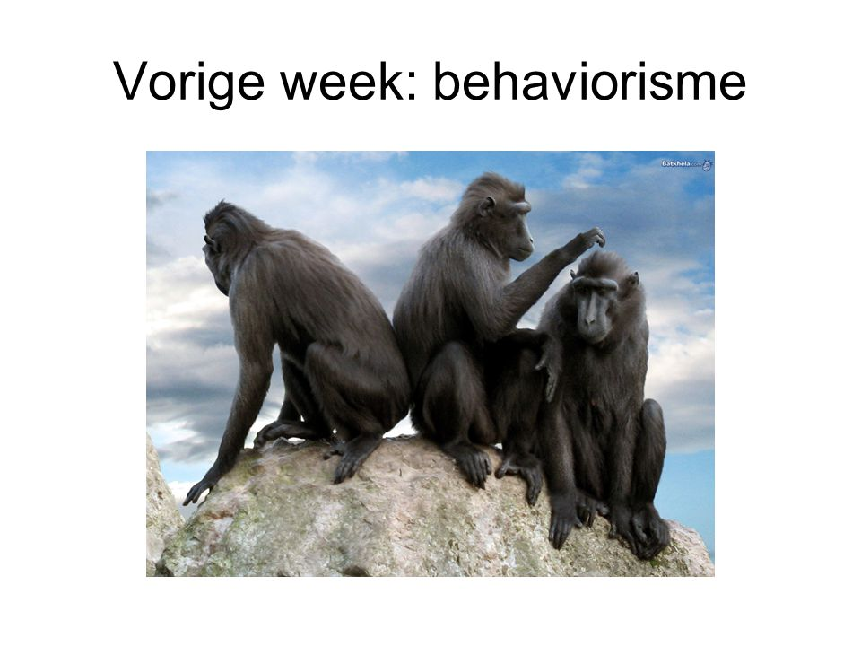 Vorige week: behaviorisme