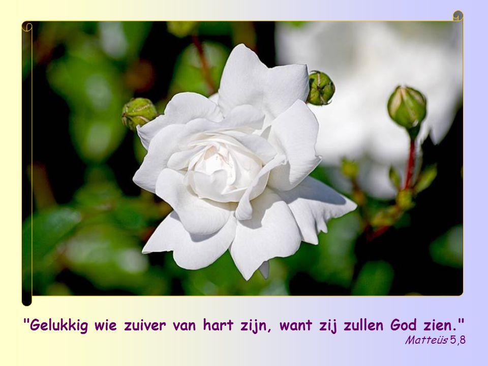 Gelukkig wie zuiver van hart zijn, want zij zullen God zien.