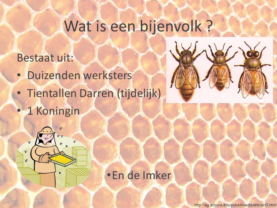 Wat is een bijenvolk Bestaat uit: Duizenden werksters