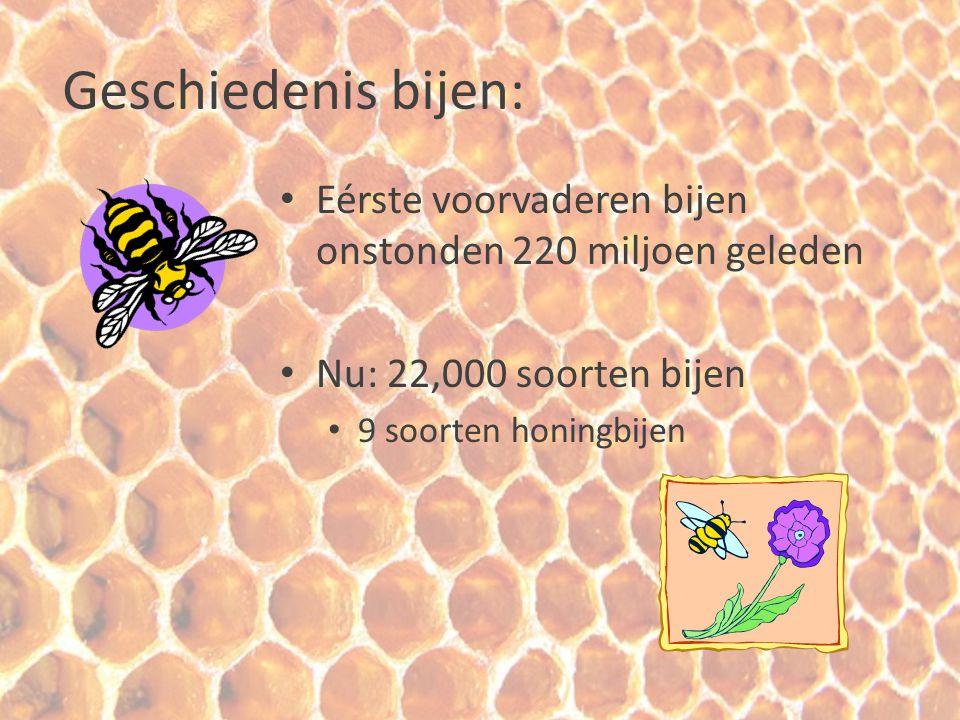 Geschiedenis bijen: Eérste voorvaderen bijen onstonden 220 miljoen geleden. Nu: 22,000 soorten bijen.