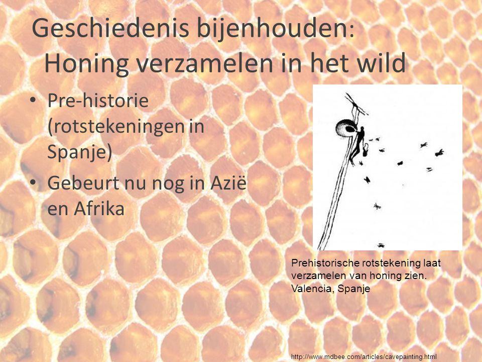 Geschiedenis bijenhouden: Honing verzamelen in het wild