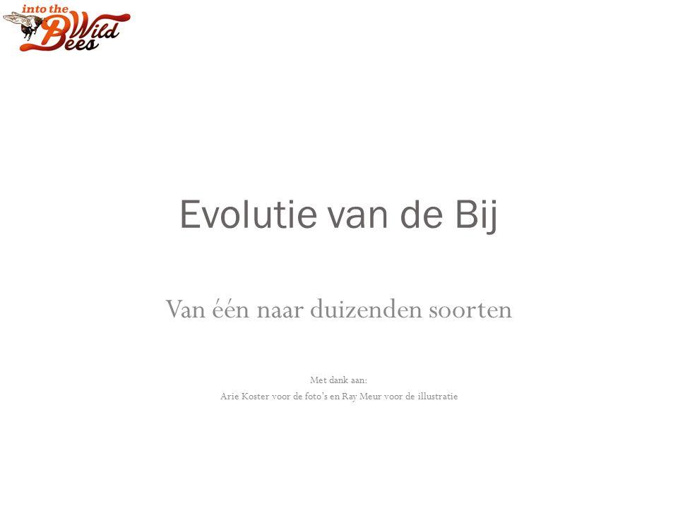 Evolutie van de Bij Van één naar duizenden soorten