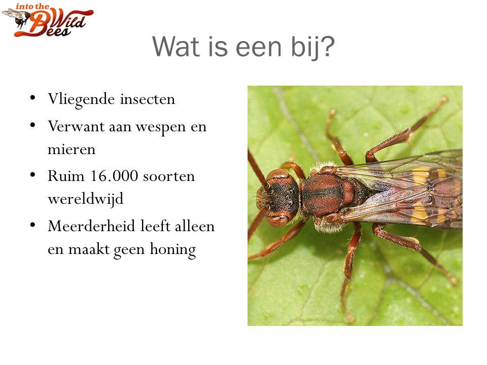 Wat is een bij Vliegende insecten Verwant aan wespen en mieren
