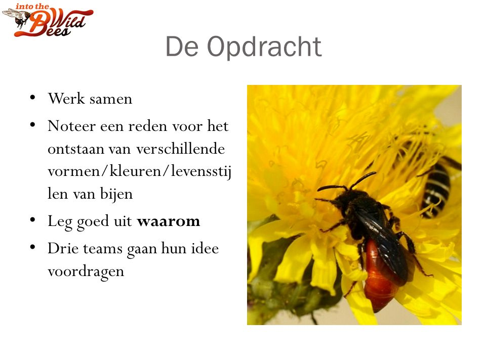 De Opdracht Werk samen. Noteer een reden voor het ontstaan van verschillende vormen/kleuren/levensstijlen van bijen.