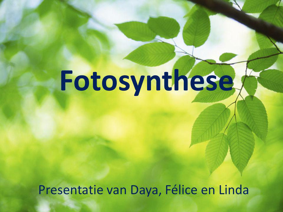 Presentatie van Daya, Félice en Linda