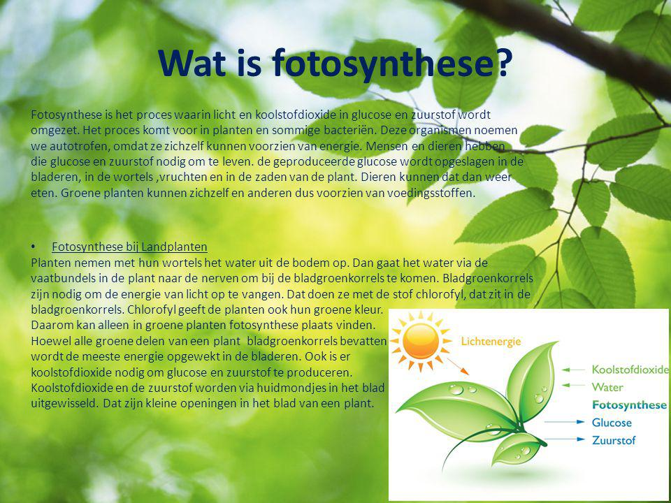 Wat is fotosynthese