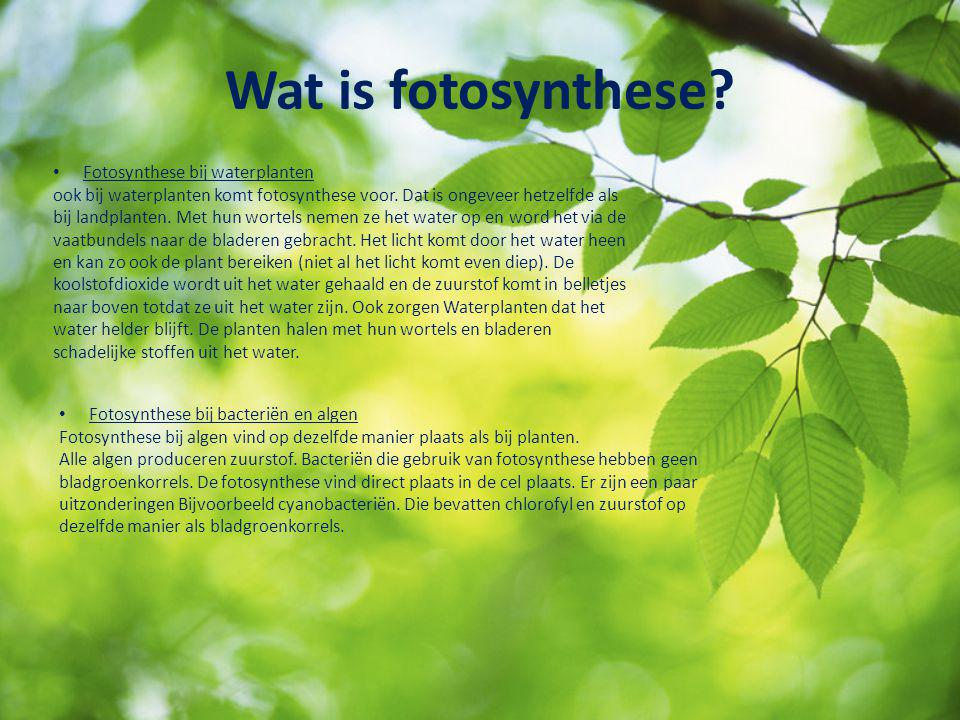 Wat is fotosynthese Fotosynthese bij waterplanten