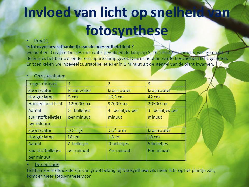 Invloed van licht op snelheid van fotosynthese
