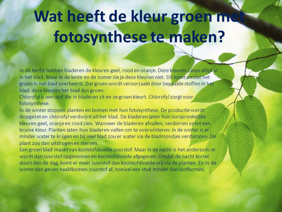 Wat heeft de kleur groen met fotosynthese te maken