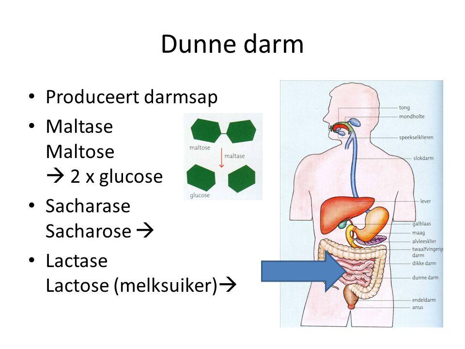 Dunne darm Produceert darmsap Maltase Maltose  2 x glucose