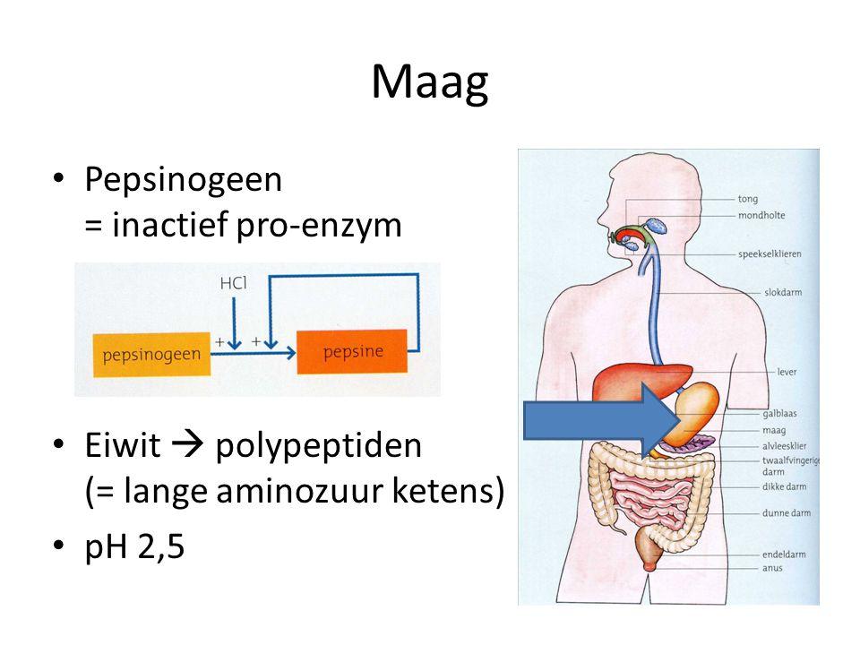 Maag Pepsinogeen = inactief pro-enzym