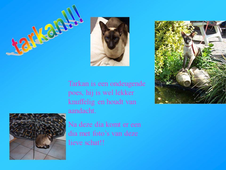 tarkan!!! Tarkan is een ondeugende poes, hij is wel lekker knuffelig en houdt van aandacht.