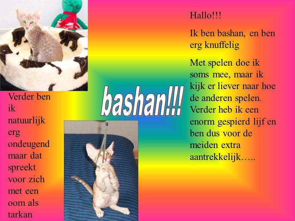 bashan!!! Hallo!!! Ik ben bashan, en ben erg knuffelig