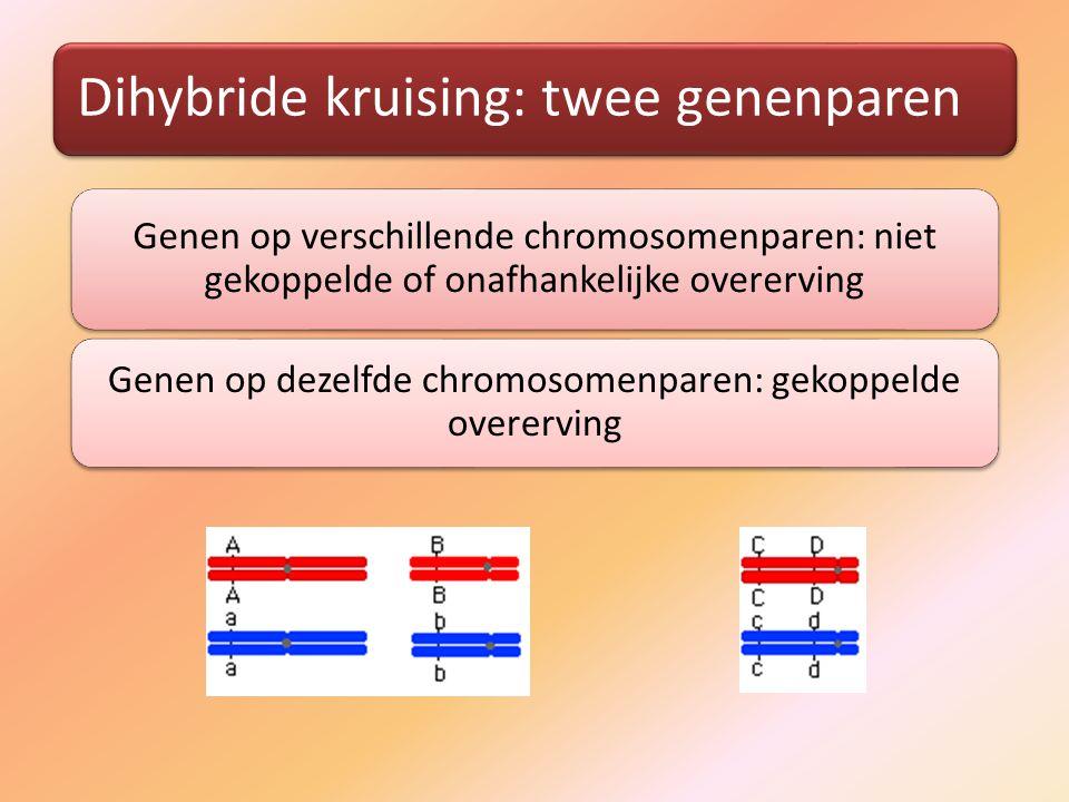 Genen op dezelfde chromosomenparen: gekoppelde overerving