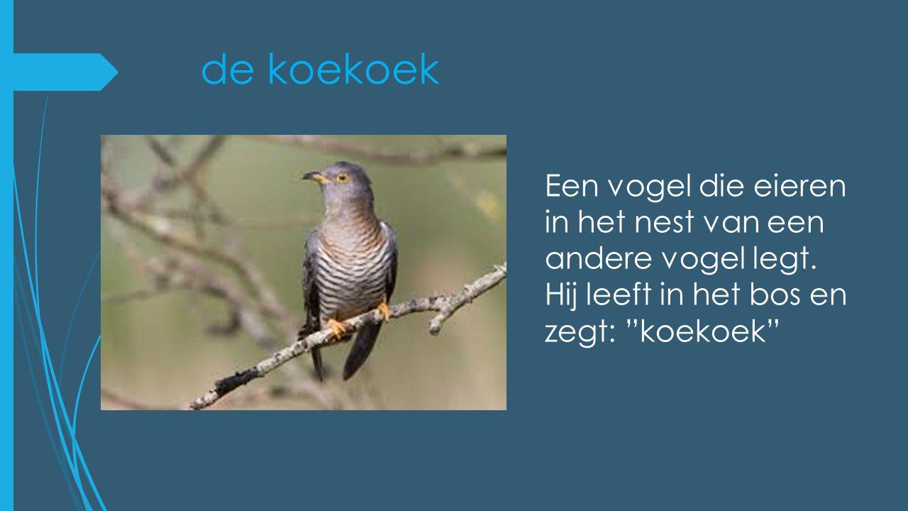 de koekoek Een vogel die eieren in het nest van een andere vogel legt.